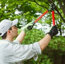 Trimming Tree - Property Maintenance